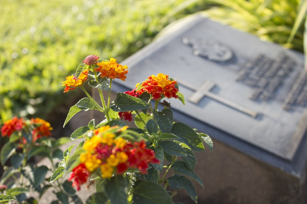 Flowers and Grave